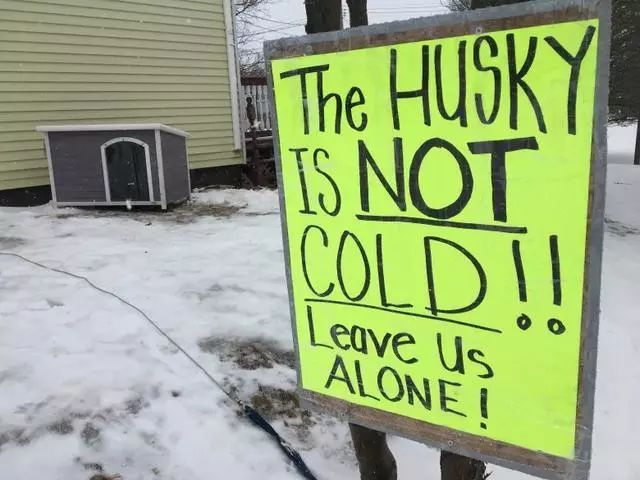 把二哈拴在雪地被投诉?兽医主人吐槽:你们不懂狗!