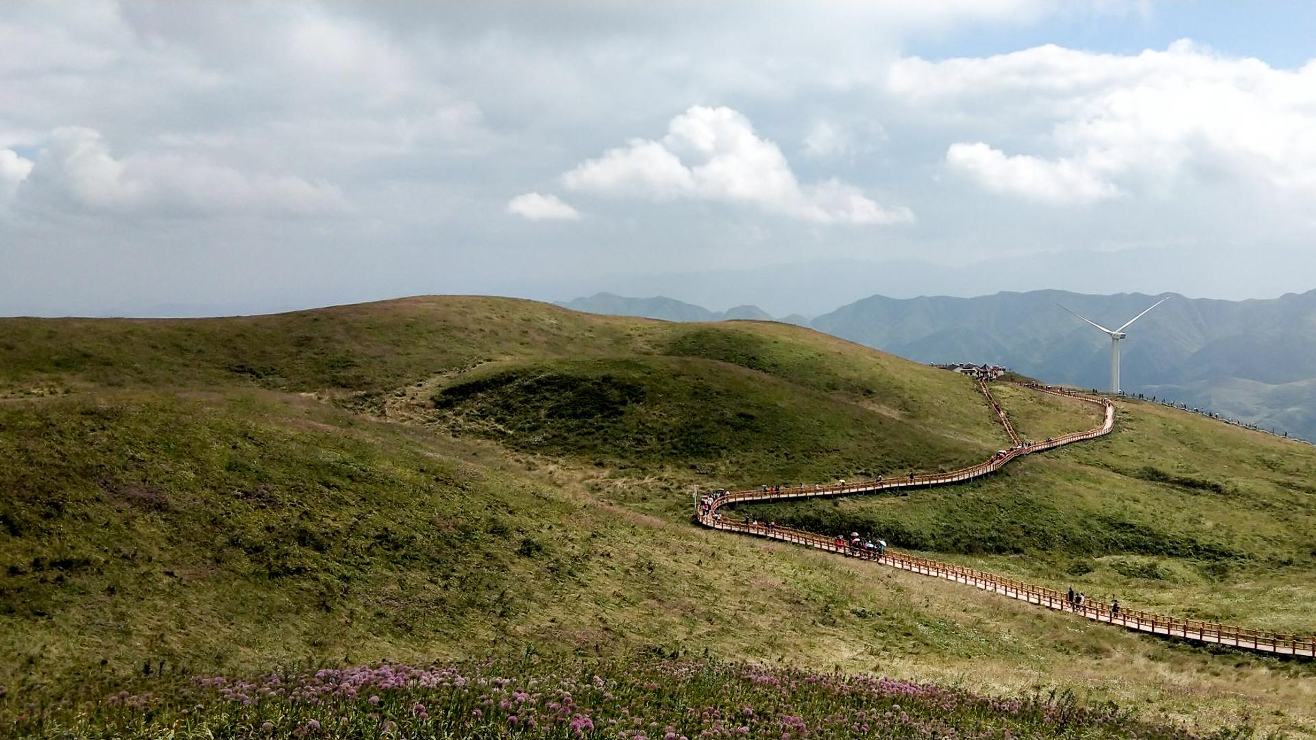 贵州一个用蔬菜命名的景区,高山上布满紫色花海,游客在这里牧云