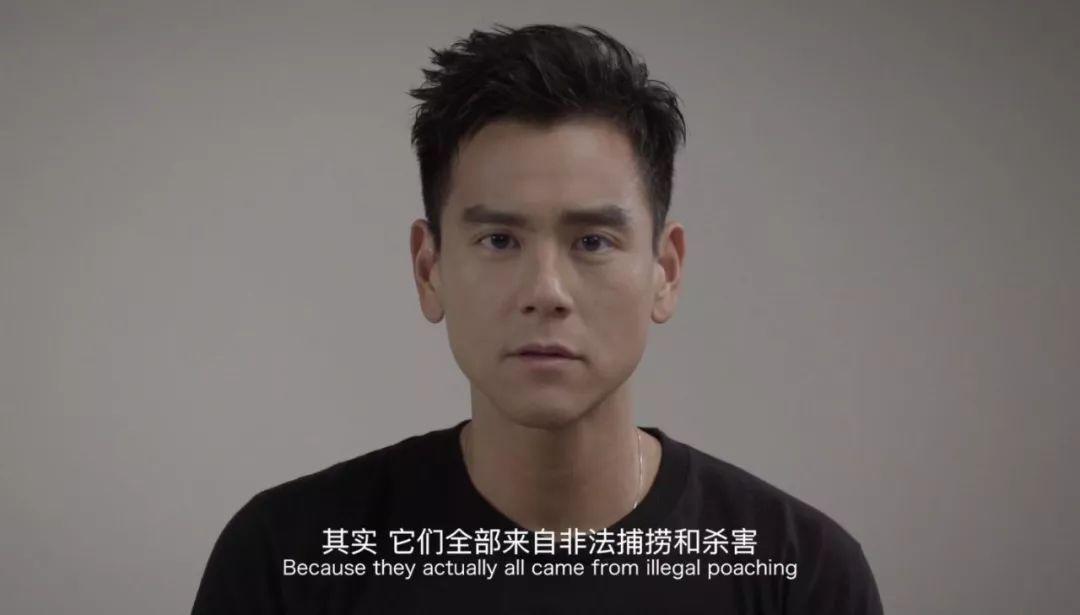 彭于晏最近的一个公益短片:不要被玳瑁的精美外表所迷惑