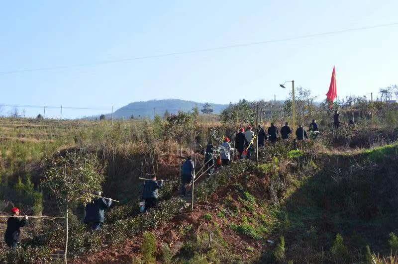 湖北竹山:植树节,为家乡种下一片绿