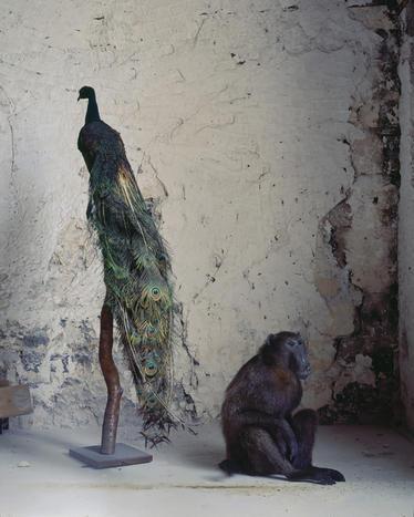 Karen Knorr:这世界本就是个动物园