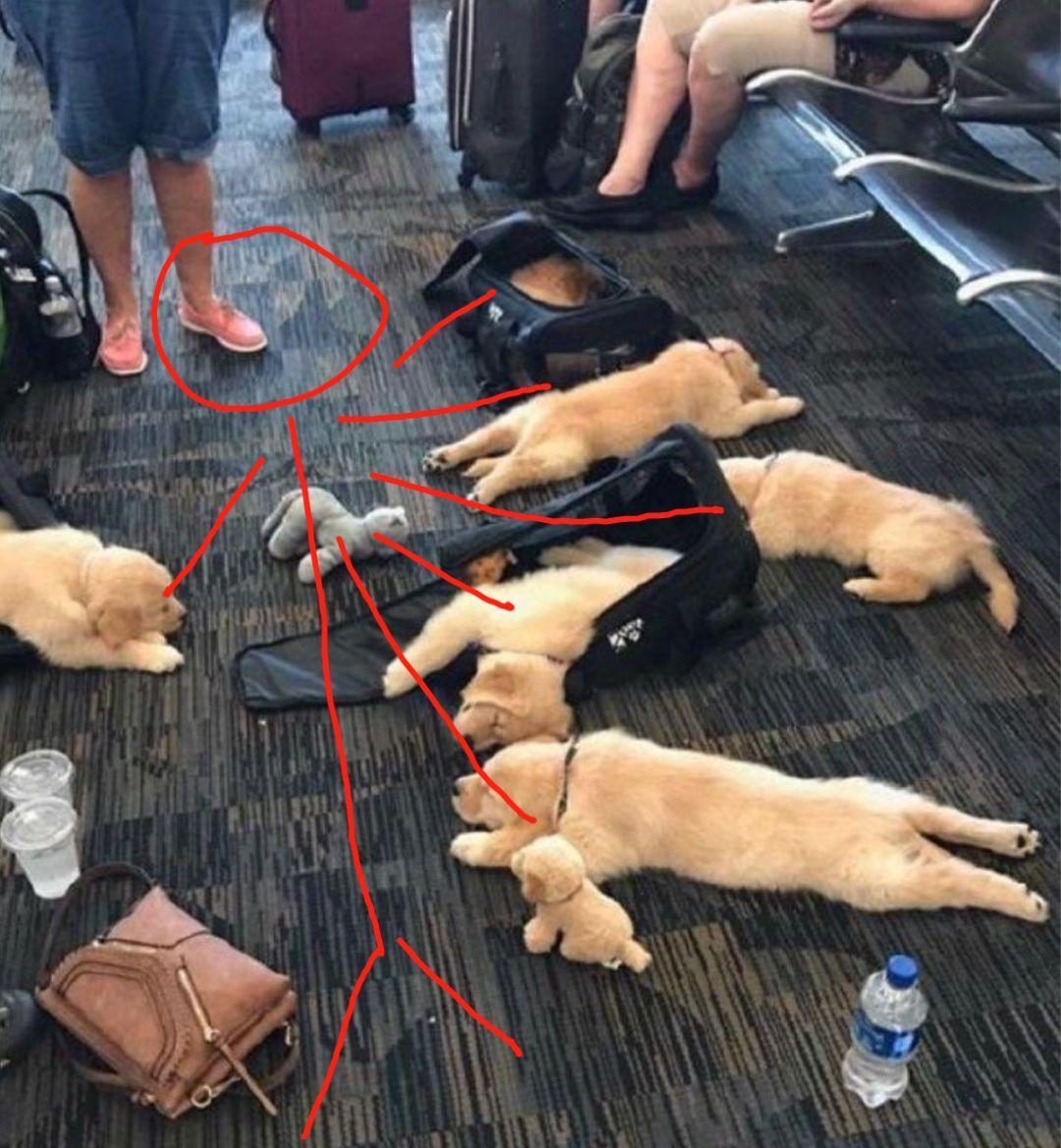 航班延误,一群旅客竟然躺在地上睡觉,这也太过分...萌了吧!