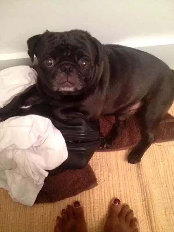"""如果家中有一条狗,那么上厕所就是一件""""麻烦事情"""""""