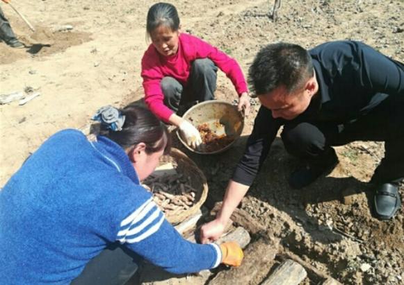 陕西山阳高坝君子涧村产业扶贫天麻带富40户