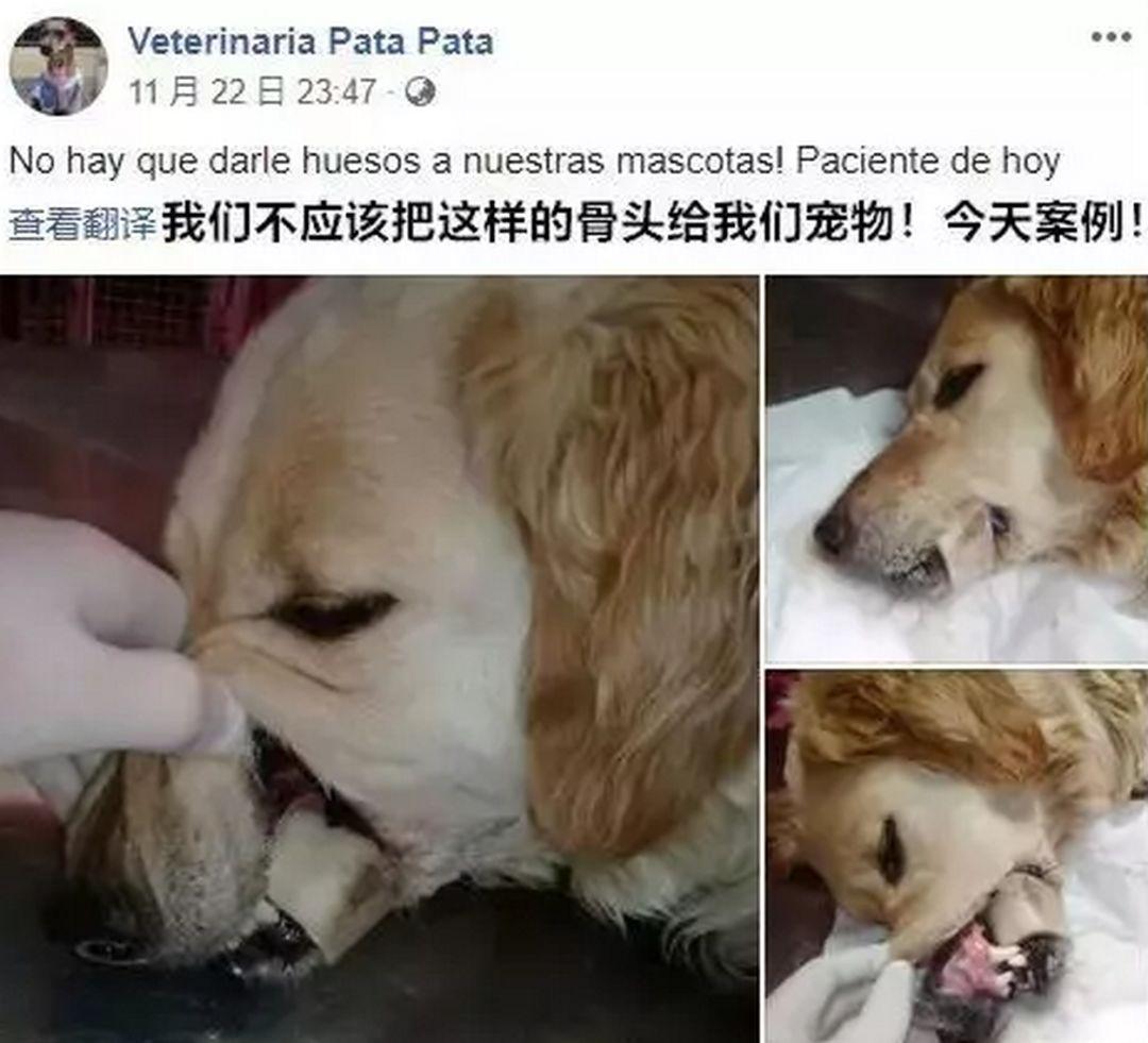 偷舔鸭肉酱汁后,狗狗不幸身亡,主人含泪告诫