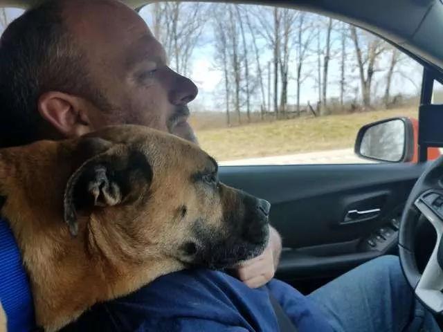 男子停车去上洗手间,回来发现车里多了一只狗