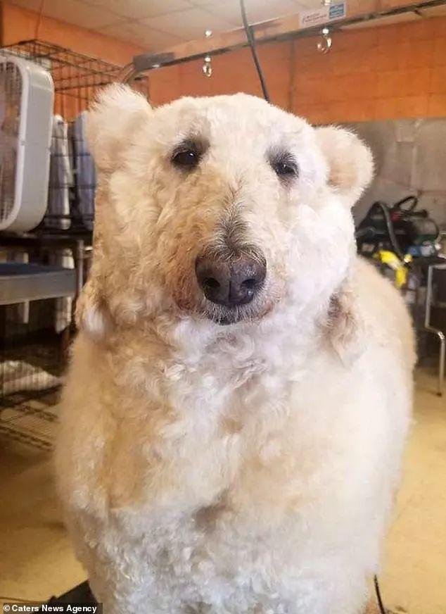 别人遛狗,她遛的是……北极熊?!