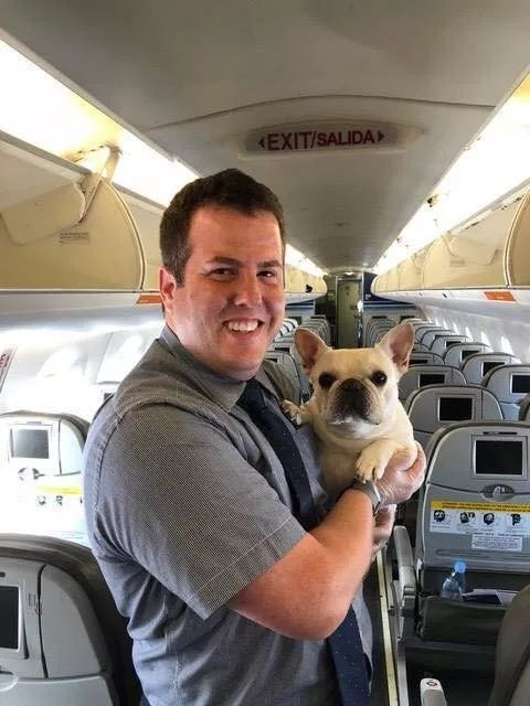像法斗和巴哥这类的短鼻狗狗,航空托运的话要谨慎一些