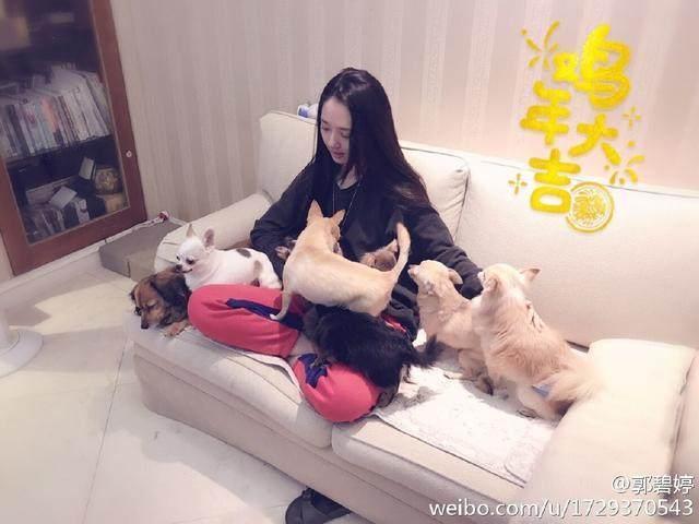 """向佐求婚仪式上摆下""""宠物阵""""?向华强和郭碧婷父亲都抱着宠物狗"""