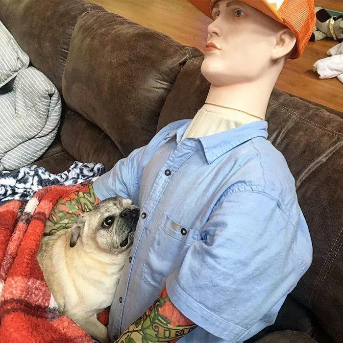 """主人不在家,狗狗就自残,为了安抚焦虑症爱犬,主人做了个""""分身"""""""