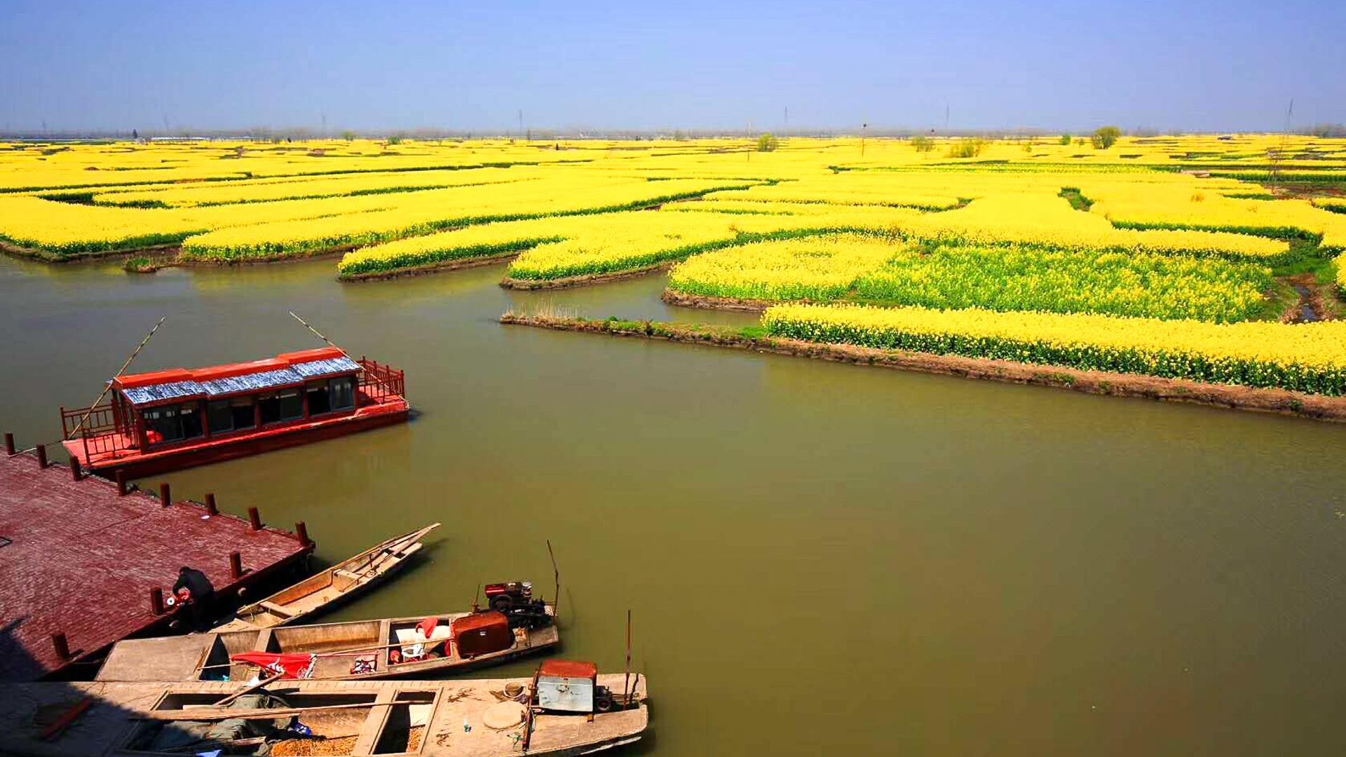 漂亮的景色都藏在农村,春季里兴化千垛景区成为泰州最美的地方