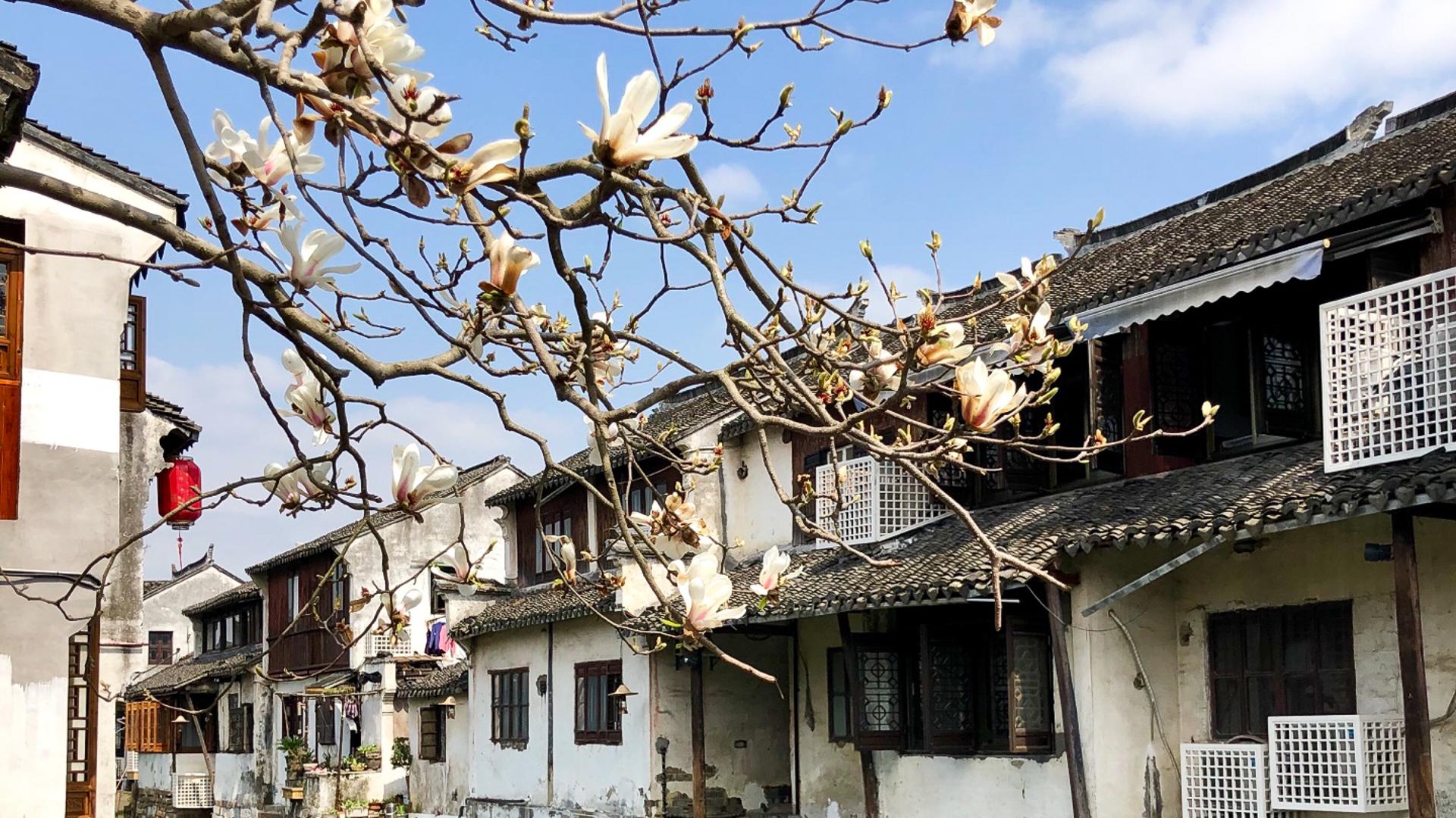 和十年前相比,江南第一水乡只剩下建筑群,古朴的气息早已消散