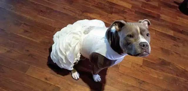要出嫁了,养的狗咋办?国外小姐姐的做法很暖心!