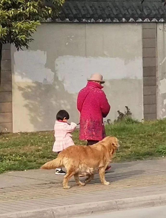偶遇一位奶奶牵孙女遛狗,可仔细看了下,奶奶是不是牵错了?