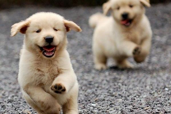 自从养了狗后,腰不疼腿不酸了,身体都变好了!