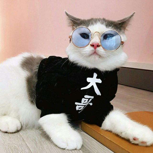 猫咪爱主人的10种行为,快来看看你中了几条?