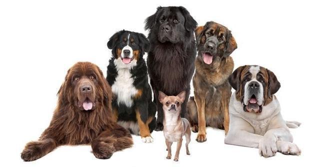 """如何挑选一只健康的狗狗?7个细节辨认""""星期狗"""""""