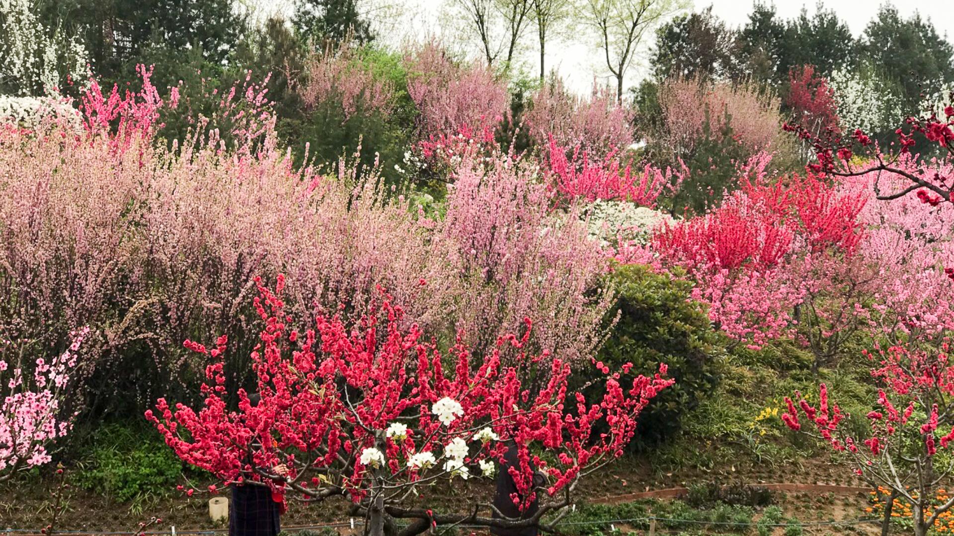 在宝鸡,赏花一定要到植物园,这里姹紫嫣红是花的世界