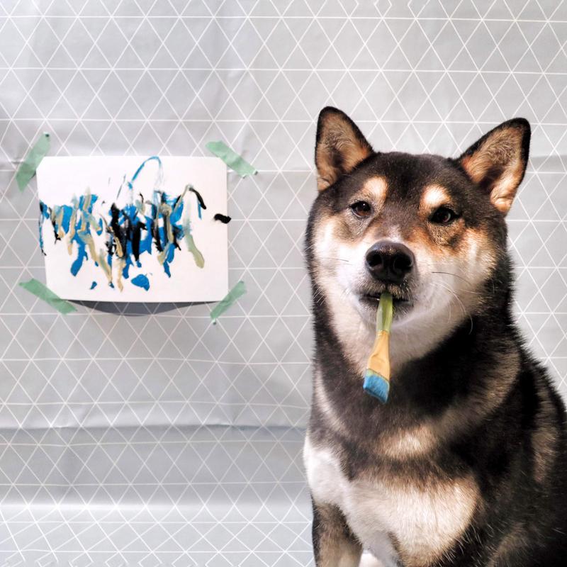 才貌双全!加拿大的一条柴犬会作画,作品卖出上百幅