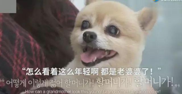 狗狗1岁等于人类7岁?你很可能一直都算错了