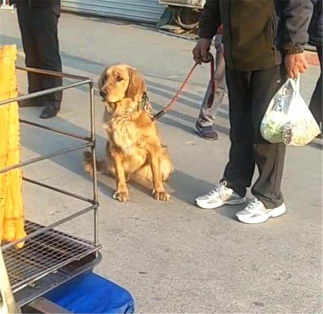 金毛跟爷爷去买早餐,买完它不走,汪:油条,我要!
