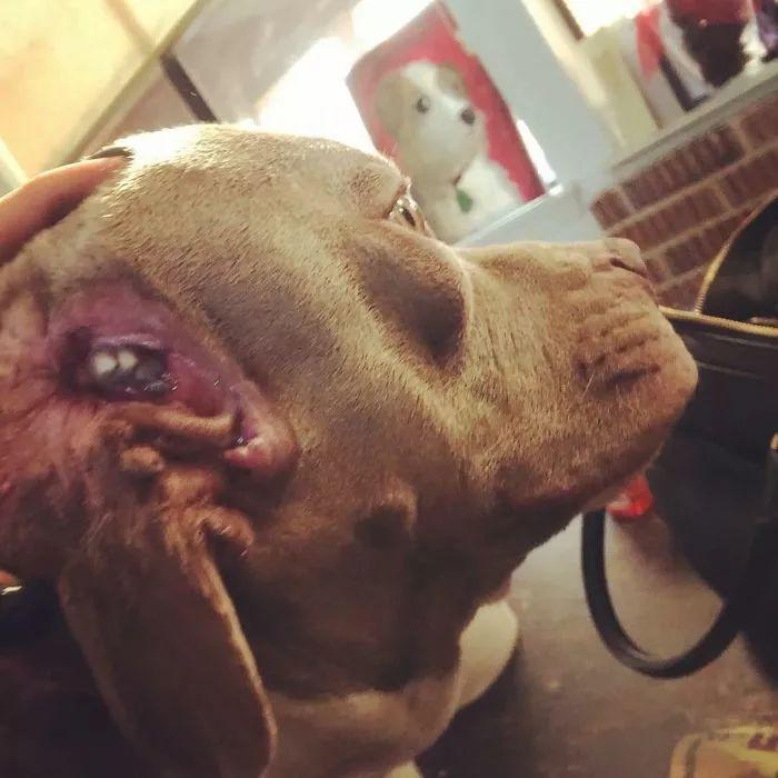 这只狗长了两张嘴,一只藏在耳朵里