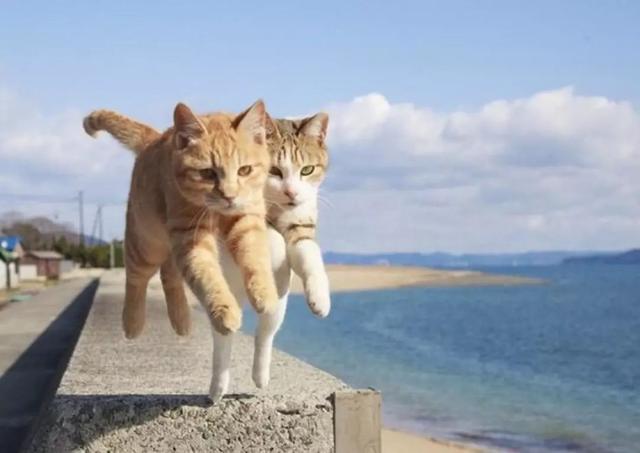 宠物主动配合摄影很困难,如何让宠物配合拍照?