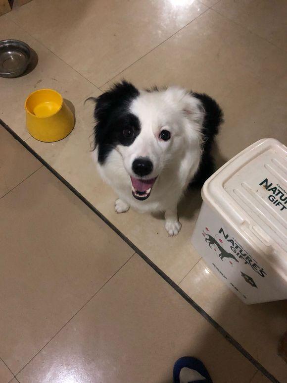 网友刚刚怀孕就遭到家里人反对养狗,汪:我不想走!