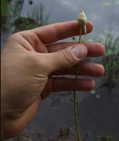 峡谷钩又名鱼卡