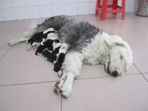 """狗狗和猫咪怀孕多久生?别误解古人的""""猫三狗四"""""""