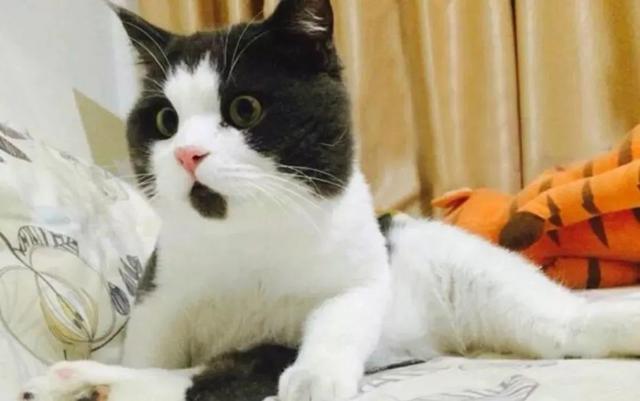 费洛蒙可以用来安抚我家猫咪吗?它又有什么用途呢?