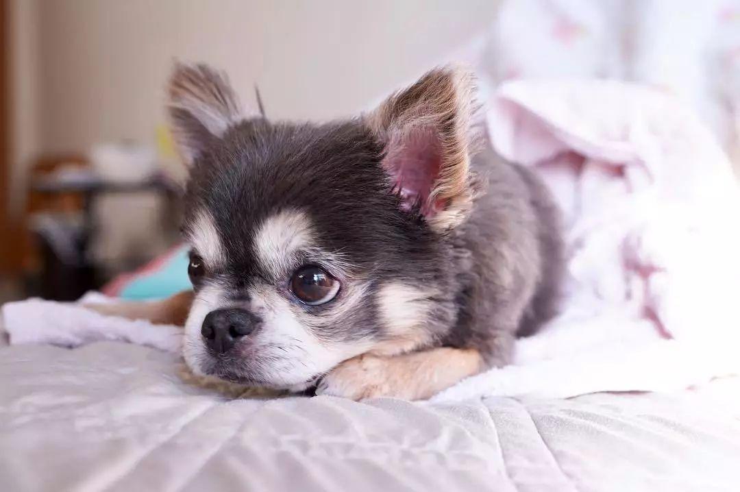 实不相瞒,这是我见过最会撒娇的狗子!