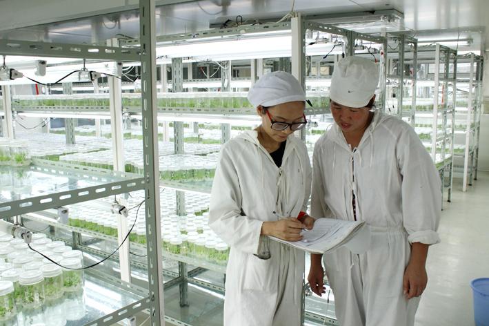 从内蒙杉一全面投产剖析全植物组培业发展