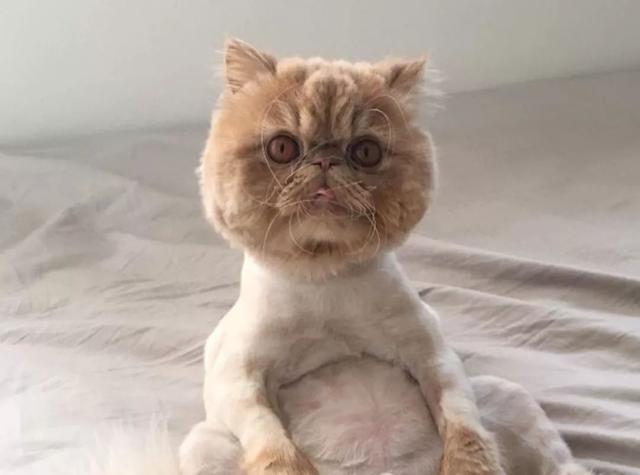 猫咪也是有抑郁症的,别因忙碌冷落家中的喵星人