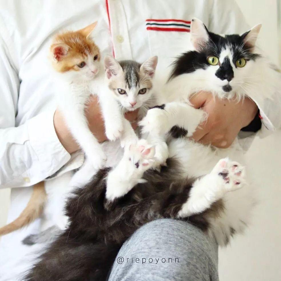 日本一猫主子带大两只流浪猫后,三小只的爱情狗血剧爆红INS