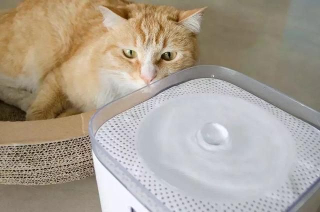 猫咪饮水并非越干净就越好,三种水源将令爱猫患病!