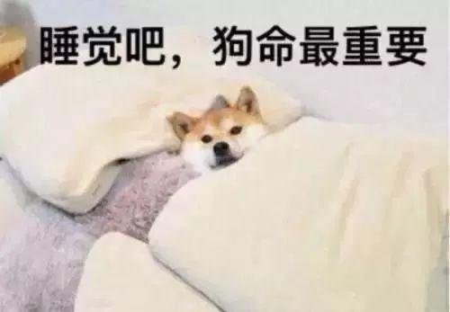 麻省理工实验发现:狗狗大部分的梦都和主人有关!