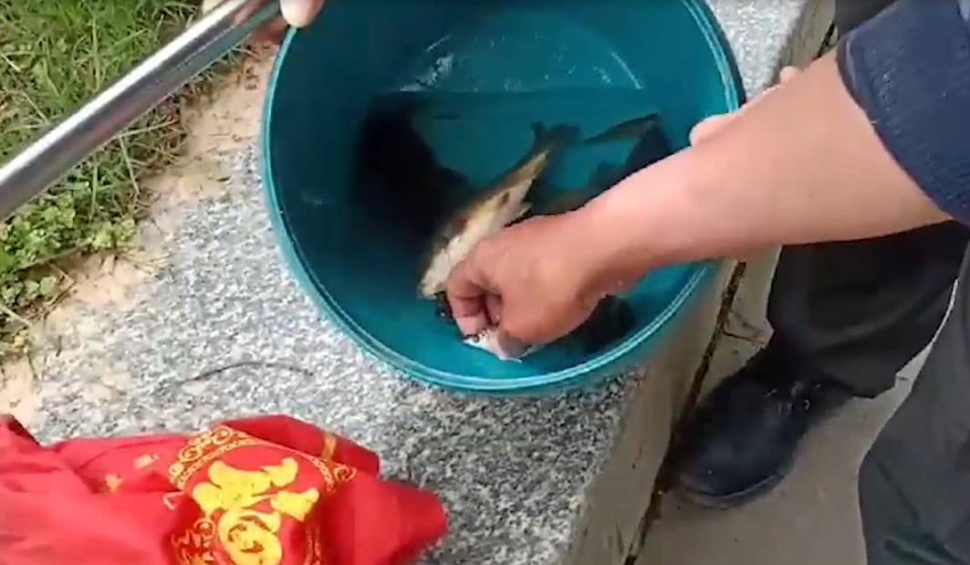 为让宠物龟吃顿饱饭,男子冒险下河坝捞鱼
