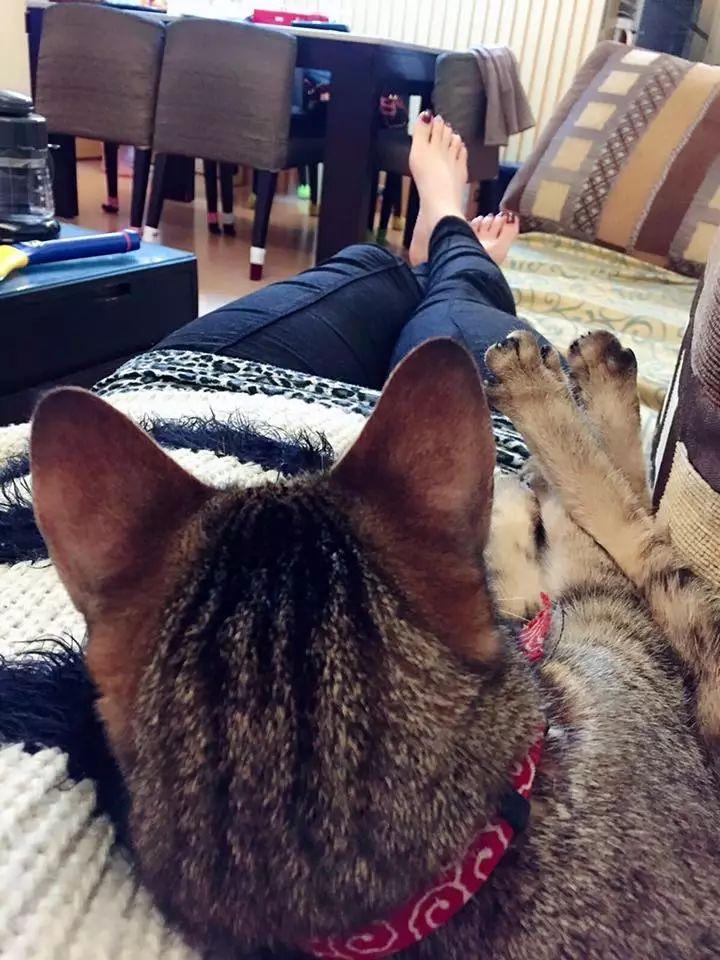 猫咪不喜欢宅在家里,整天在主人旁边喵喵叫,要出去玩