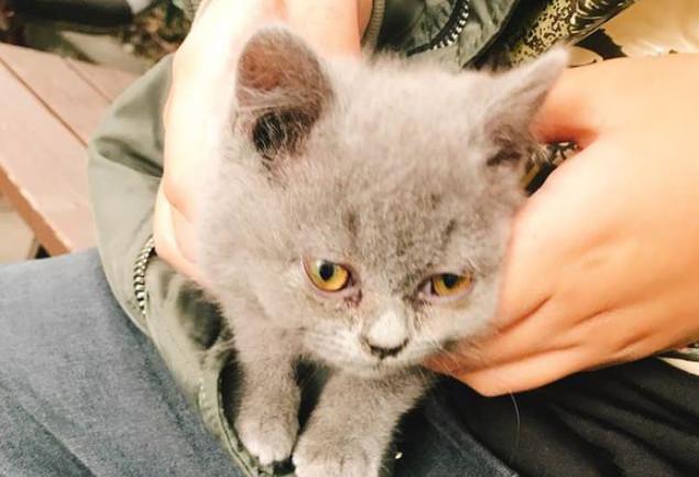 猫咪因耳螨导致继发性中耳炎的治疗方法