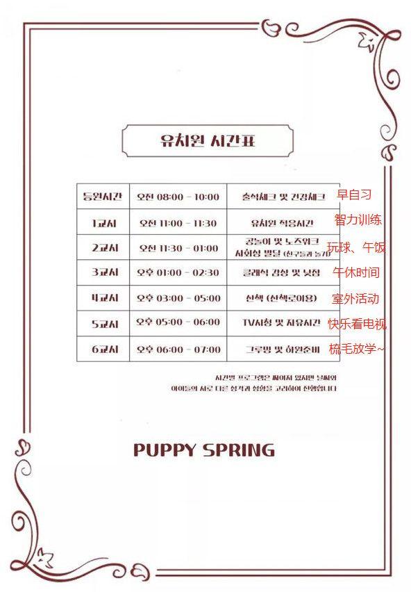 韩国开了一家狗狗幼儿园,帮上班族的狗狗家长解决后顾之忧