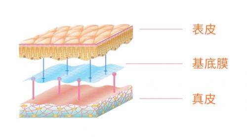 敏感肌发病率逐年增高 艾思诺娜基底膜修护临床试验启动