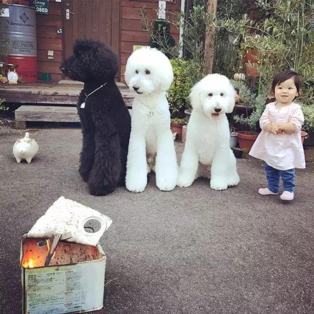 """网上很火的""""黑白骑士团"""":三只巨贵和一个小女孩"""