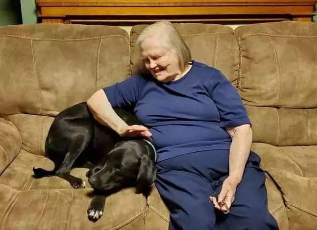 不顾奶奶反对带回家一只流浪狗,没想到它救了奶奶一命!