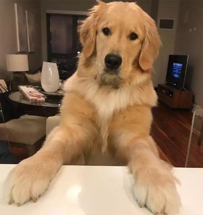 全小区都认识我的狗,却不认识我!