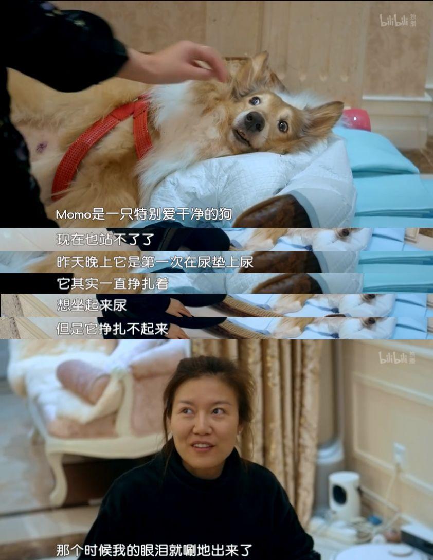 动物版《人间世》刷爆b站,超治愈!网友:我居然哭成了狗