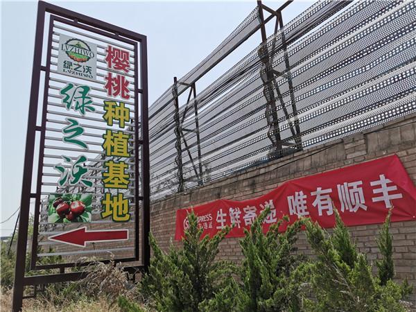 山西省曲沃县万户村绿之沃大樱桃种植基地又迎来了最佳采摘期