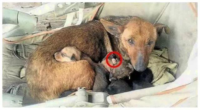 跨越种族的母爱:流浪狗麻麻抱紧弃婴为她取暖.