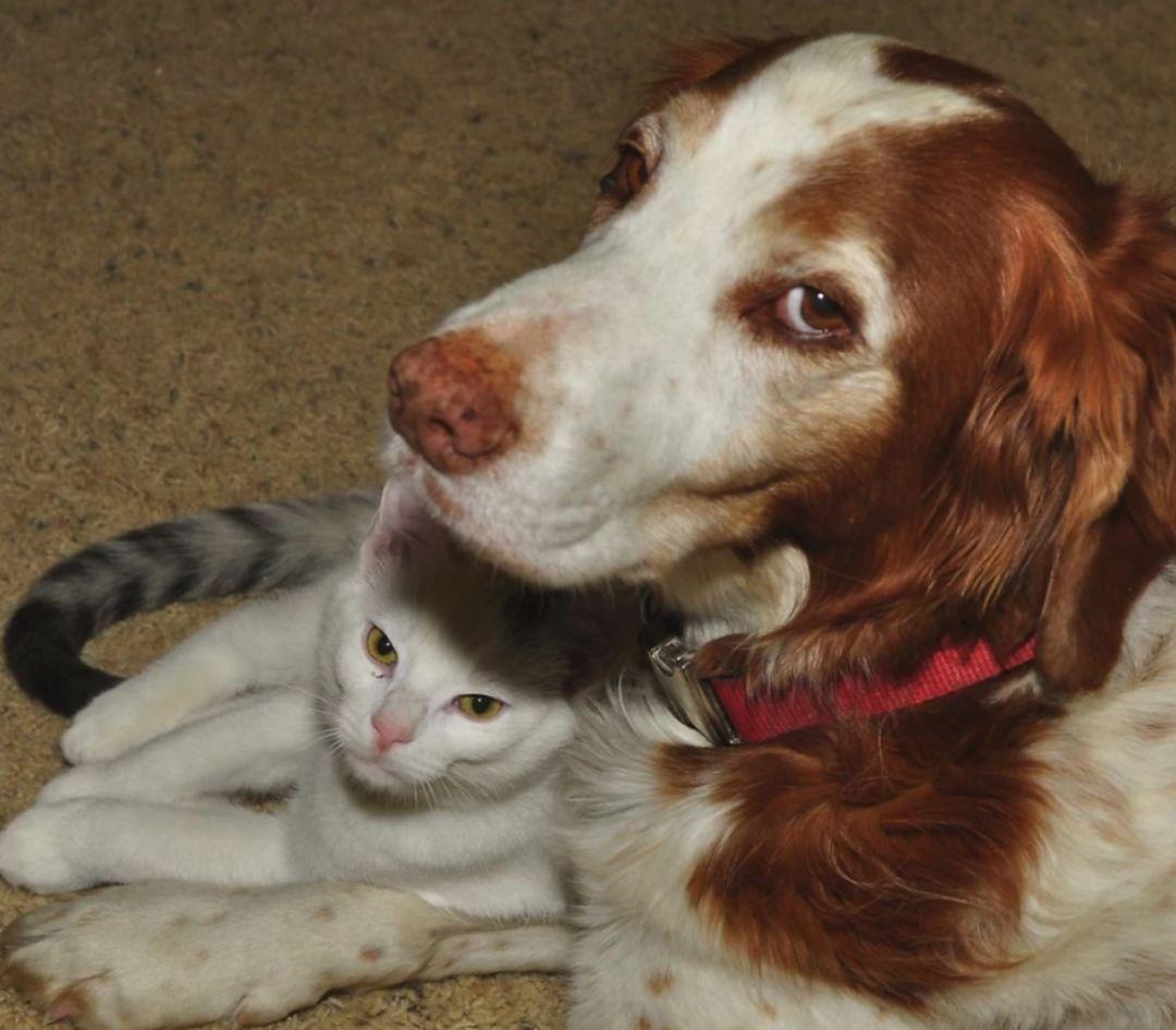 偷狗要蹲10年牢?盘点下世界各地为了保护动物制定的法律!