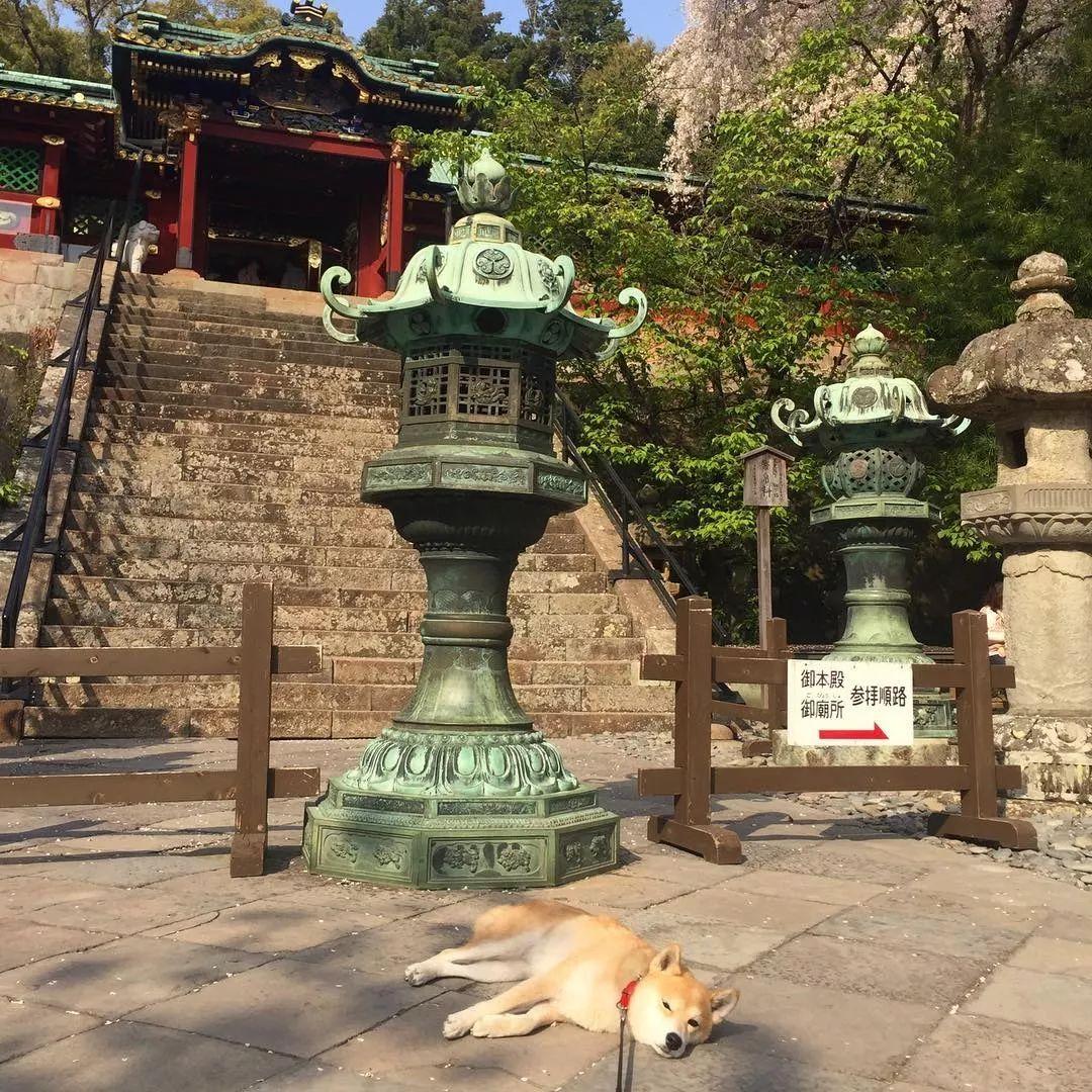 带狗砸去环游世界,这货却只想睡觉,景点全部躺着打卡